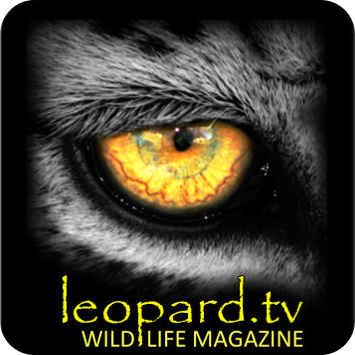 Leopard.tv Wildlife Magazine App