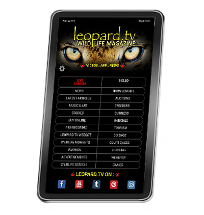 Leopard.tv Wildlife Magazine App